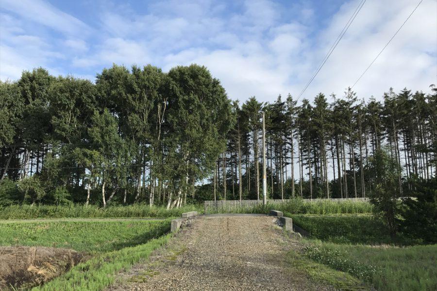 入り口の道路は白樺並木